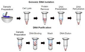 کیت، بافر، مواد و محلول های استخراج RNA ، DNA و پلاسمید